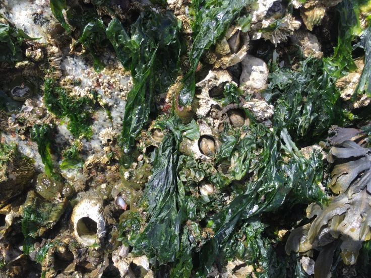 A tiny close up landscape of barnacles, seaworms, drills, and seaweed in diverse shapes and colors.